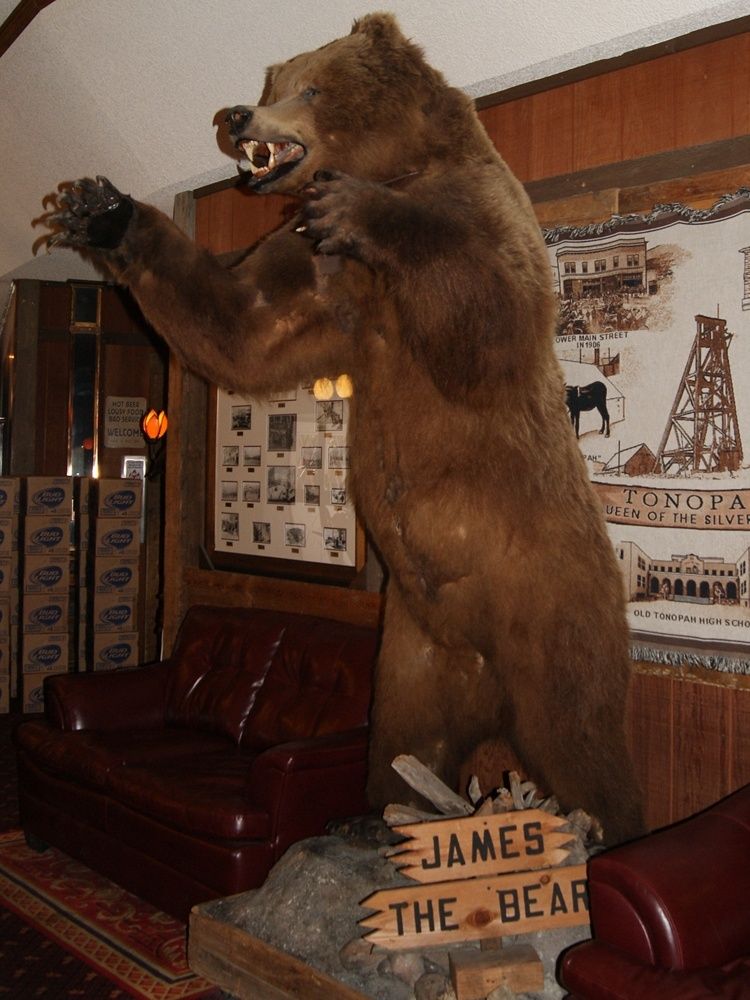 A Stuffed Bear in Tonopah Station Hotel
